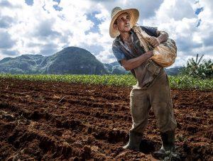 Nông dân Cuba chuẩn bị gieo hạt sau khi đã làm đất