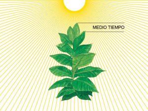 Medio Tiempo là 2 lá trên ngọn của cây thuốc lá, hấp thụ nhiều ánh sáng tự nhiên nhất
