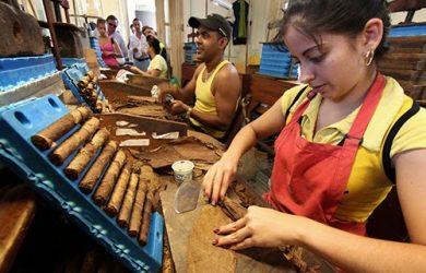 sản xuất xì gà cuba